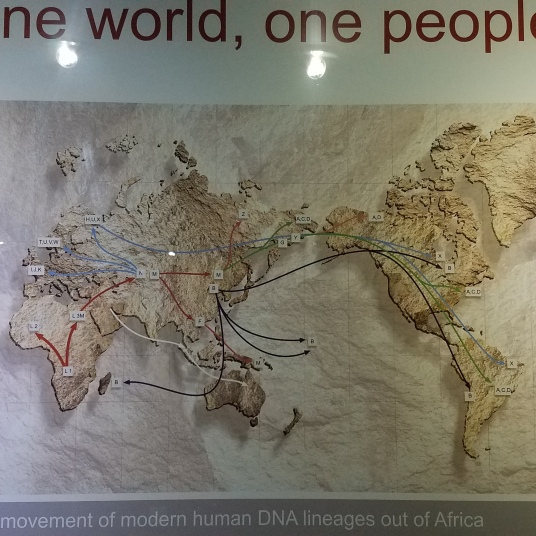 Incredible map that shows paths of human migration.